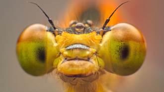 Con la lente macro, es posible capturar los diversos detalles.  (Imagen: Reproducción / Shutterstock)